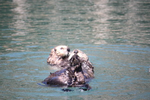 Mother and baby sea otter.