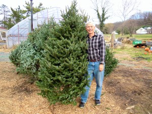 A lovely tree from Wilbur's Farm
