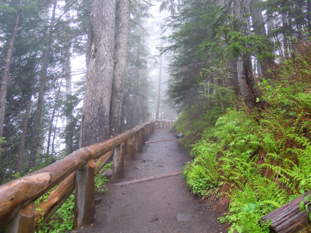 Hiking Mt Rainier National Park