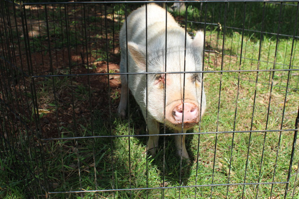 future bacon, Critters on the Road: Wild and Tame