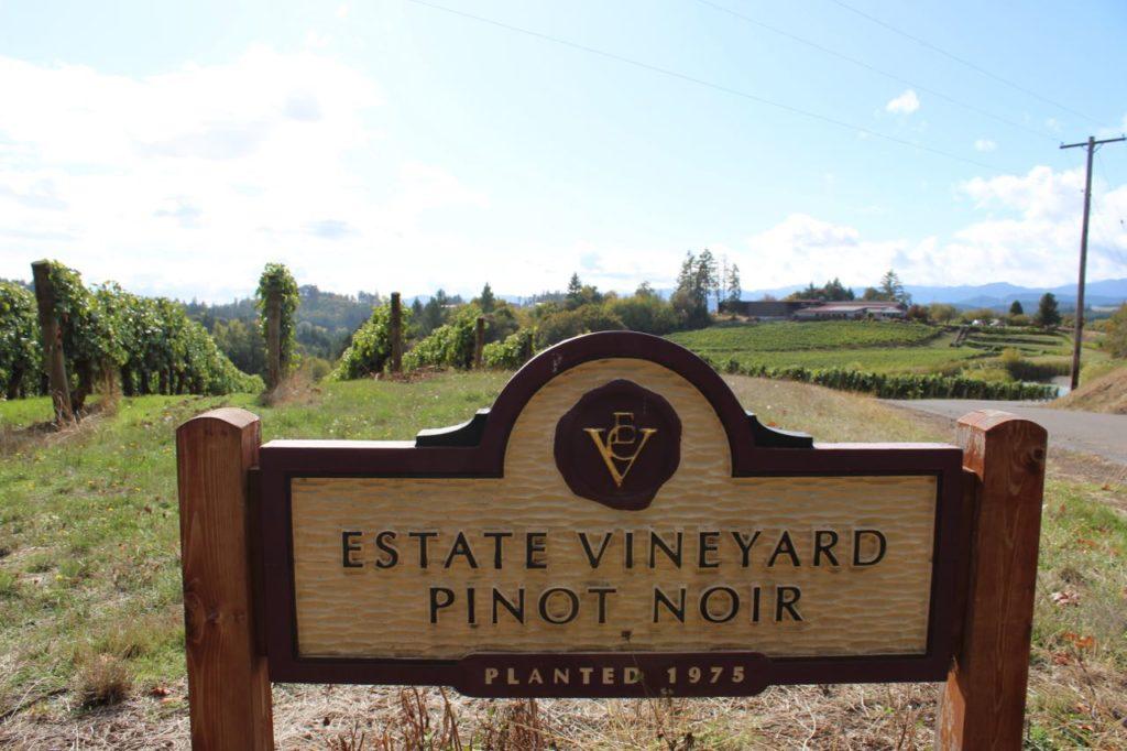 Wine Exploring Near Portland Oregon