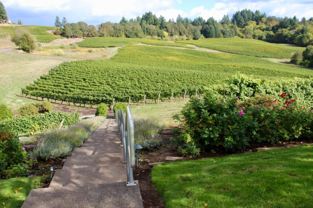 View of Elk Cove Vineyards, Wine Exploring Near Portland Oregon